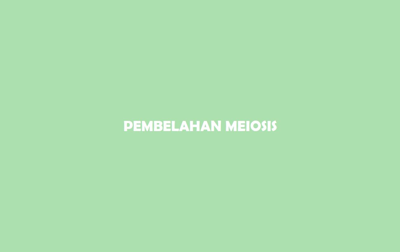 Pembelahan Meiosis