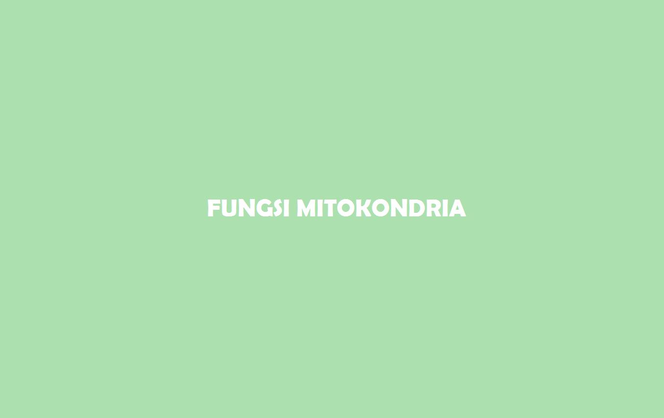 Fungsi Mitokondria Pengertian Fungsi Struktur Manfaat