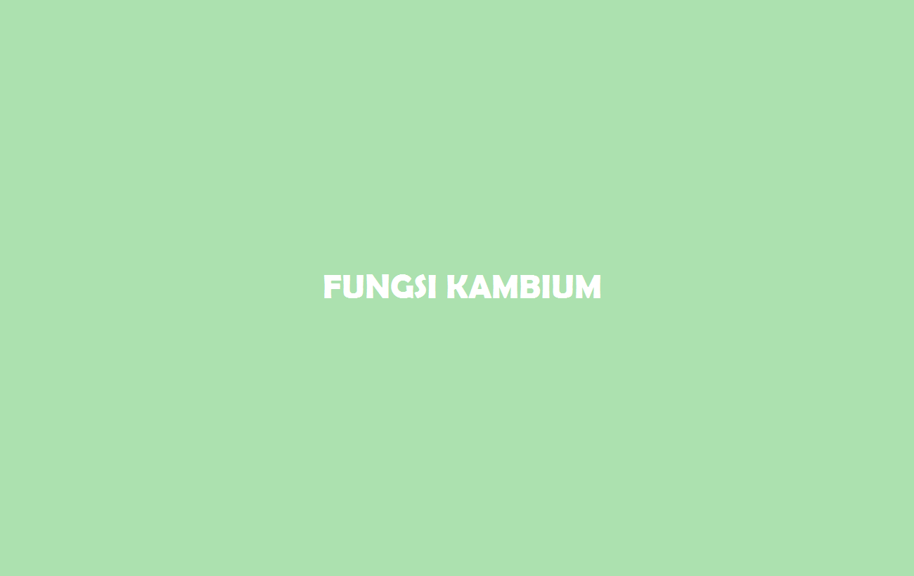 Fungsi Kambium
