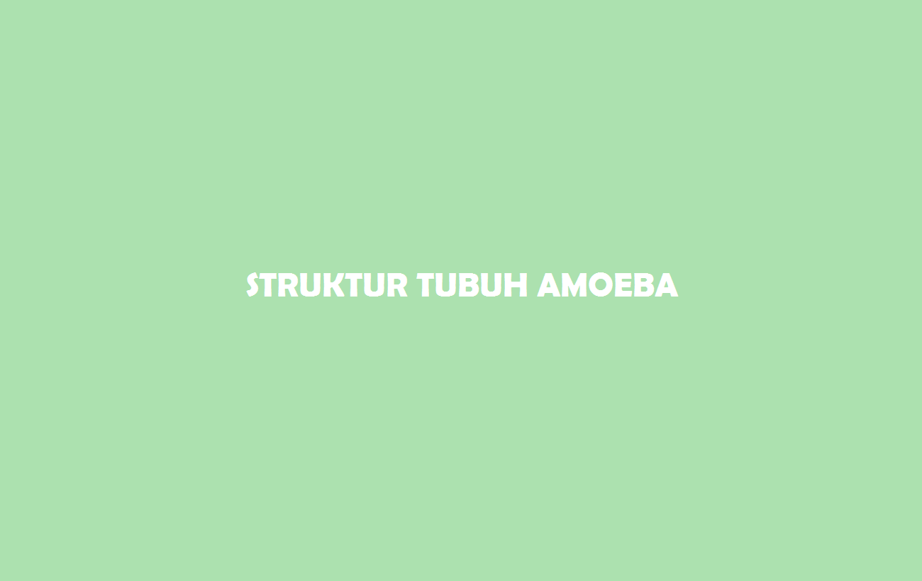 Struktur Tubuh Amoeba